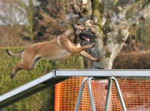 Educateur Chien - Pension Canine près de Rouen et Neufchâtel-en-Bray