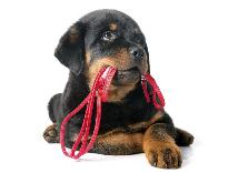 Educateur canin près de Rouen et Neufchatel-en-Bray