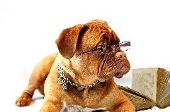 Educateur Canin à proximité de Bosc le Hard et Saint Saens