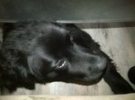 Pension Canine près de Rouen - Bébé Barney tu passe pas !