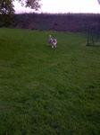 Pension Canine proximité Bosc le Hard - Marley en délire