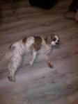 Pension chien près de Neufchatel-en-Bray - Jepsy