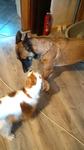 Education Canine près de Rouen - Retour de Jepsy avec Basaliah