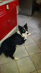 Education Canine près de Rouen - Homard perturbé dans son repos ! 2