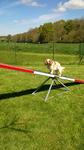 Pension Familiale proximité Saint-Saens - Jepsy apprend l'agility