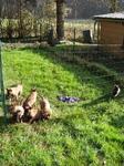 Educateur Canin entre Rouen et Neufchâtel-en-Bray - Parc extérieur