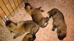 Education Canine près de Rouen - Et les 3 autres... (plus un de l'autre groupe qui s'incruste sur la photo)