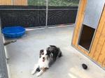Education chien entre Bosc le Hard et Saint Saens