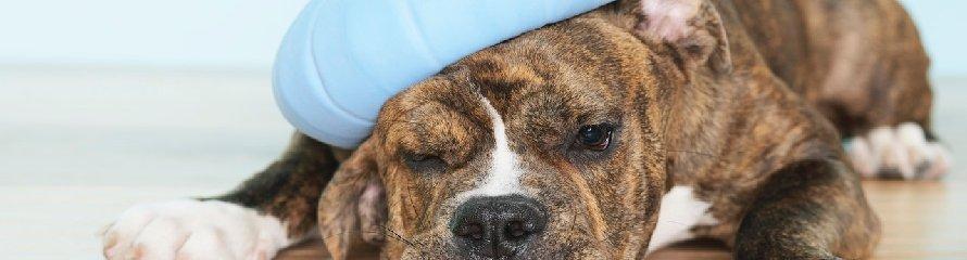 Educateur Chien - Education Canine - Pension Chien - Pension Canine - Entre Rouen et Neufchatel-en-Bray, près de Bosc-le-hard et Saint-Saens.